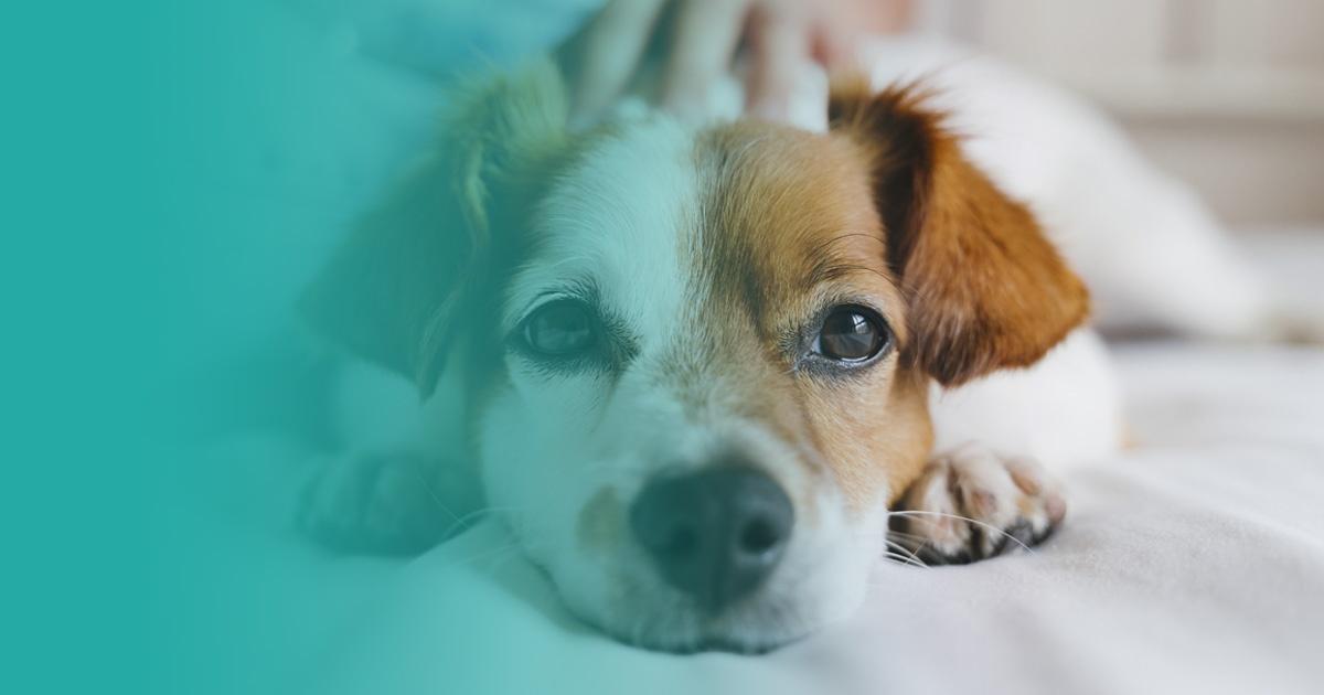 Mi perro ha muerto: ¿qué hacer?