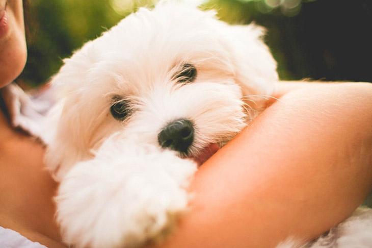 Superar la pérdida de una mascota