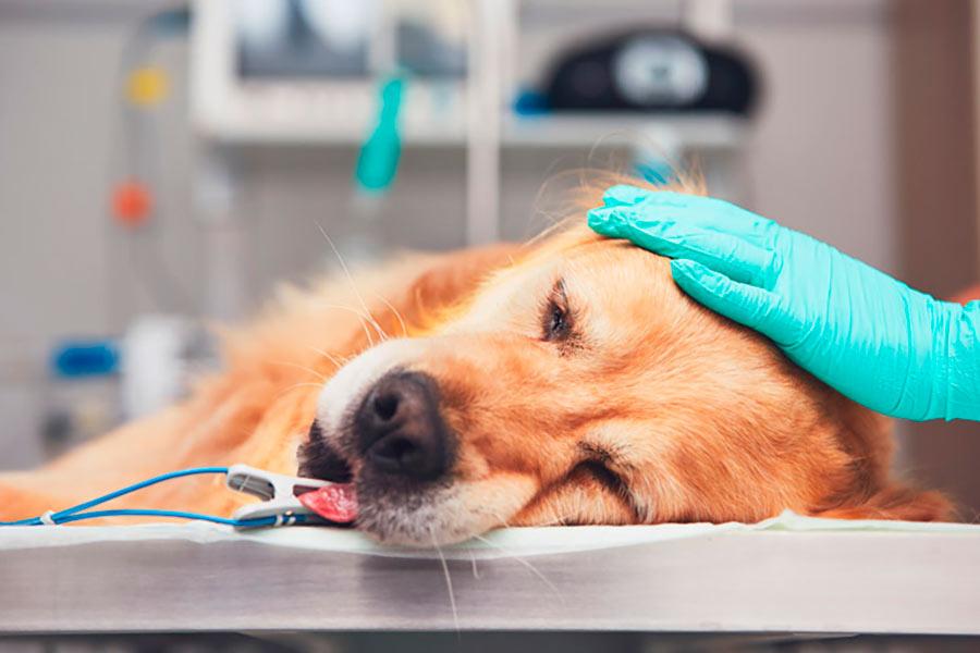 enfermedades frecuentes en perros