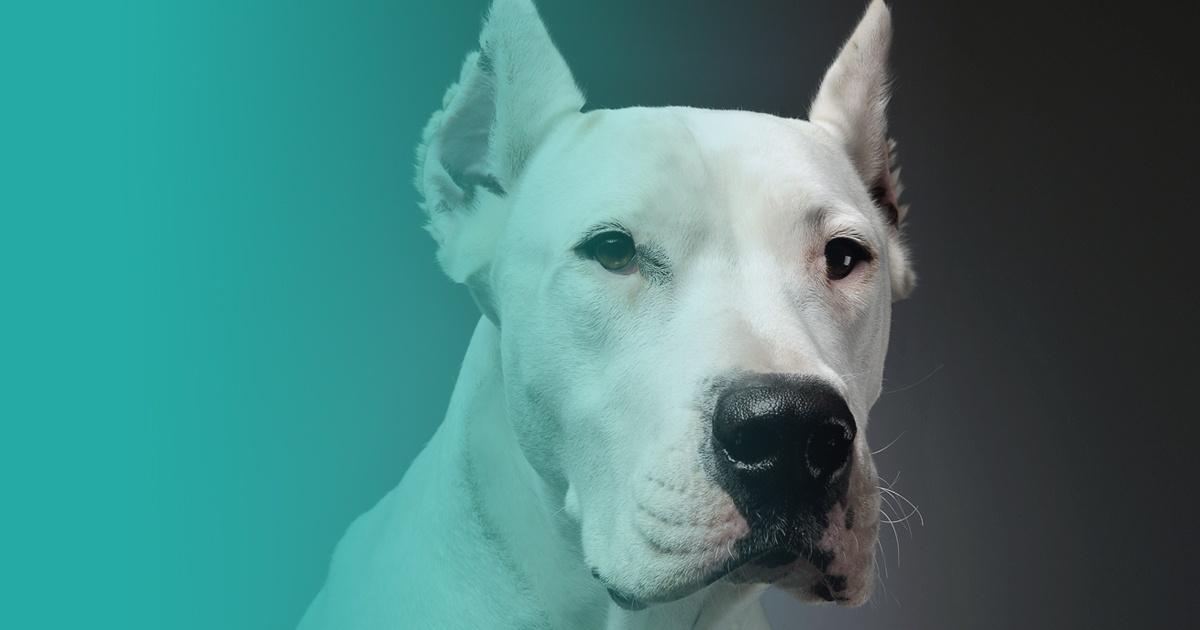 perros potencialmente peligrosos