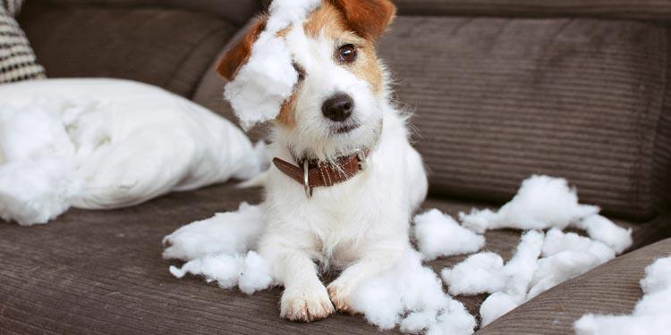 Cómo educar a un cachorro para evitar desperfectos en casa