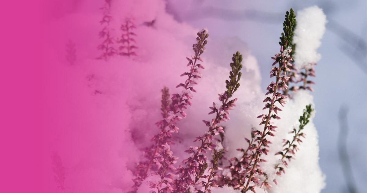plantas de jardín exterior en invierno