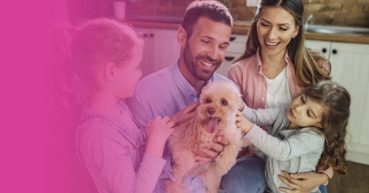 razas de perros hipoalergénicos alergia