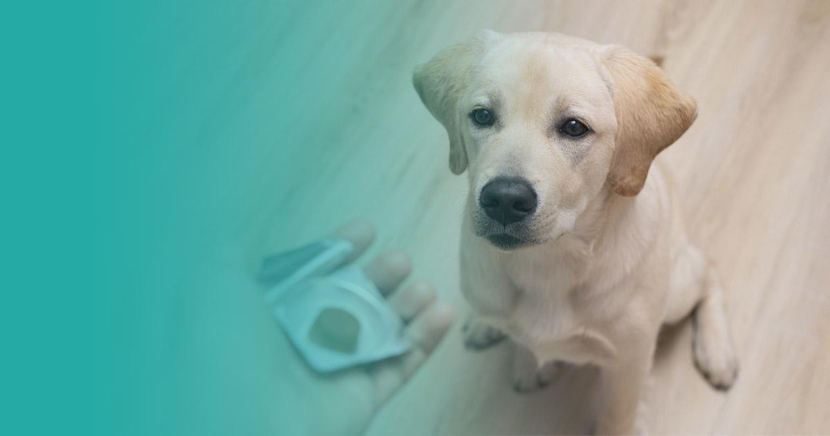 como desparasitar a tu perro